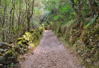 Campo - vecchio camino
