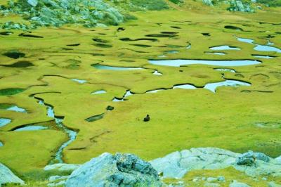 Bocca di Verde - Pozzines